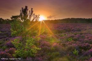 RSPB Arne in Dorset. Photo credit:Ben Hall