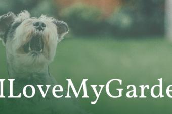 dog in a garden with the text #ILoveMyGarden
